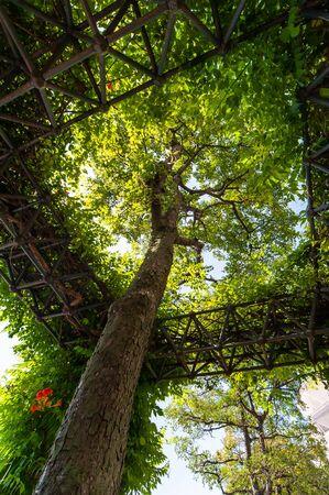 Aesthetically arranged park tree shelves