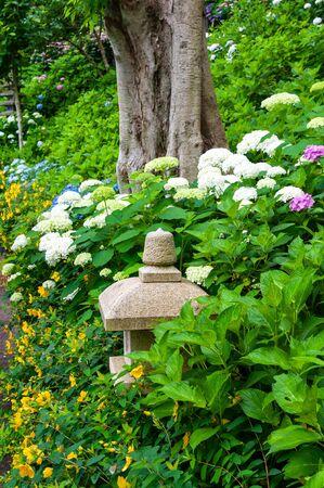 Thick tree trunk, hydrangea and stone lantern