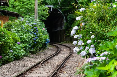 Curved track, tunnel and hydrangea