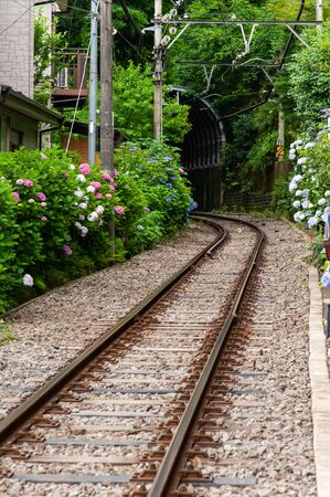 A track surrounded by many hydrangea flowers