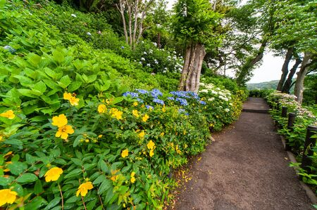 Sidewalk surrounded by various types of flowers