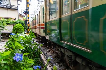 Train passing near hydrangea flowers