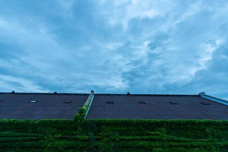 Buildings covered with green ivy and clouds that are likely to rain