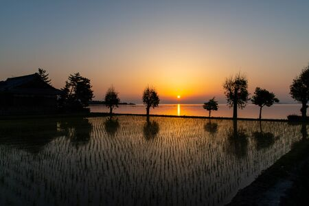 Paddy field with the sun rising from Lake Biwa and interesting shaped trees
