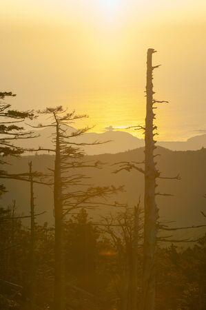 The orange sun, sea and tree trunks.