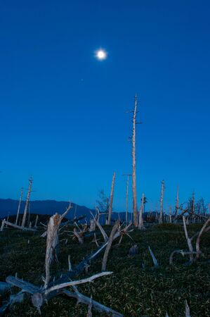 The dawn sky, the moon and the dead trees