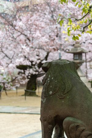 A stone statue of a dog staring at a cherry blossom