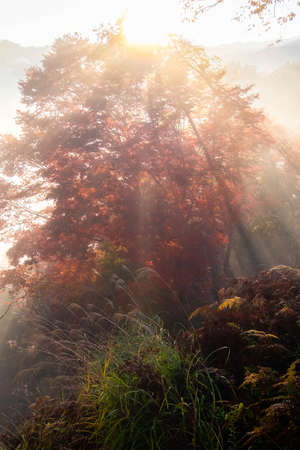Red leaves and a glow of morning mist