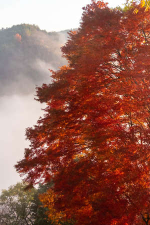 Brightly colored leaves and morning mist
