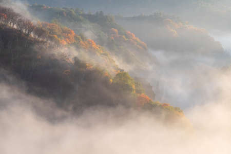 Morning mist on a red-foliage mountain slope