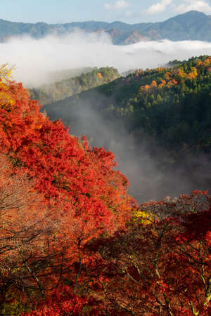 Morning mist and brightly colored leaves