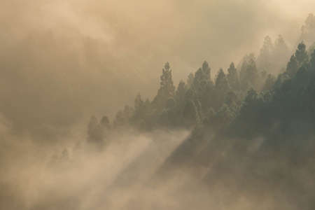 A morning mist in the mountainous region with a glow created by sunlight 写真素材