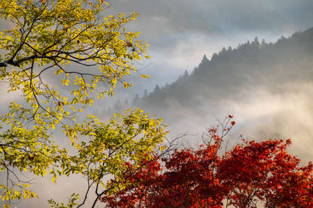 Yellow and red leaves and the morning mist in the background 写真素材