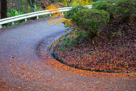 A maple leaf that fell on a steeply curved mountain road