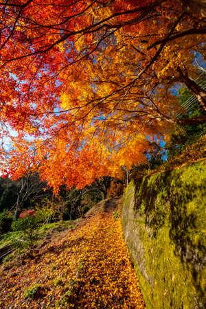 Shadows of autumn leaves on a mossy wall and a mountain path