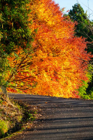 The road leading up to the flaming foliage 写真素材