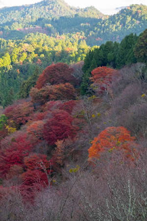 Mountains with a variety of colored leaves 写真素材