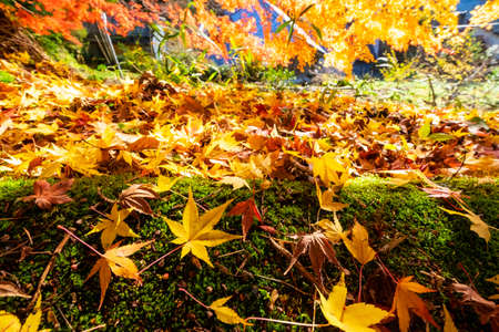 Many colored leaves on the ground
