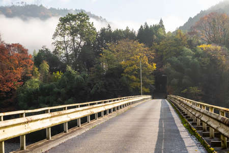 Straight roads, morning mist and autumn leaves 写真素材