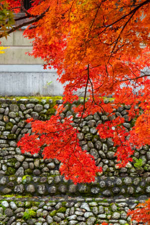Vivid autumn leaves in front of a stone wall