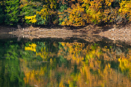 Yellow leaves reflected in the lake 写真素材