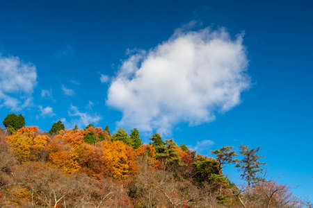 Interestingly shaped clouds and mountains of autumn leaves