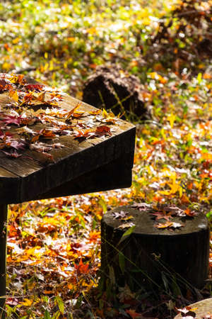 Autumn leaves piled up on a table and chairs made of wood