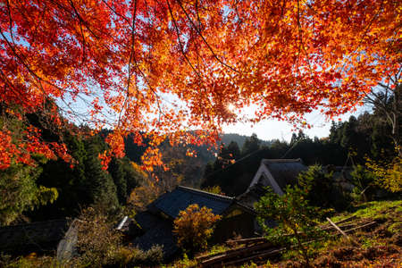 Japanese style architecture and brightly colored leaves 写真素材