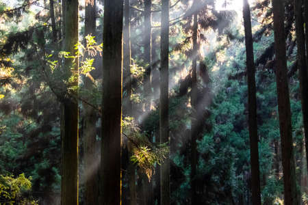A beautiful forest with a glow created by the sun