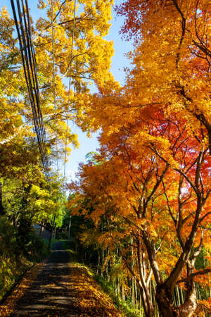 A sidewalk covered in colorful foliage 写真素材