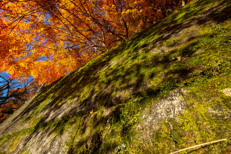 The shadow of autumn leaves on a mossy wall 写真素材