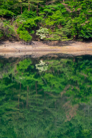 Fresh greenery and rocky surfaces reflected in the lake 写真素材