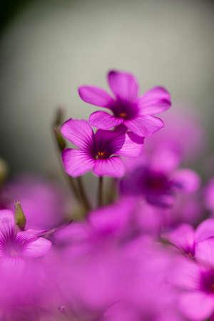 Small purple flowers in full bloom