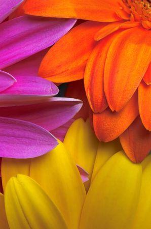 flowers petal as a coloured cocktail