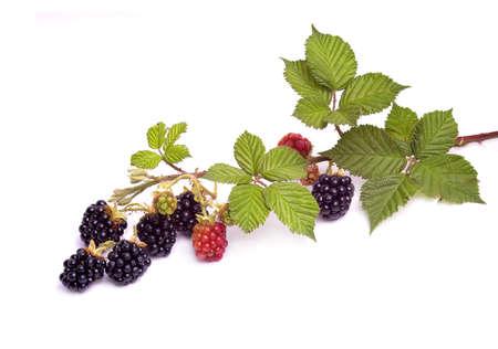 Blackberry brunch Stock Photo