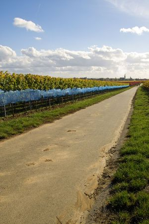 road between the rows of ice wine grapes, Germany photo
