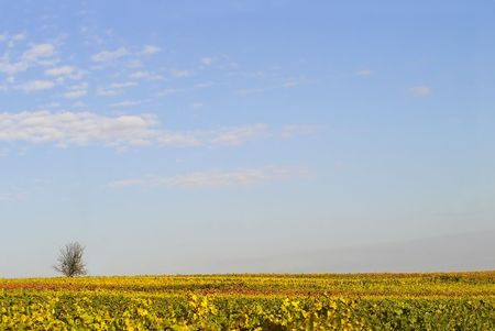 blue sky over the wineyards, Germany photo