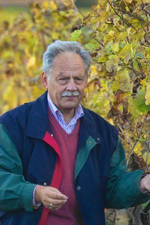 winemaker: mature winemaker checking the grapes Stock Photo