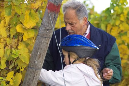 grand child: mature winemaker checking hte grapes together with hid grand child