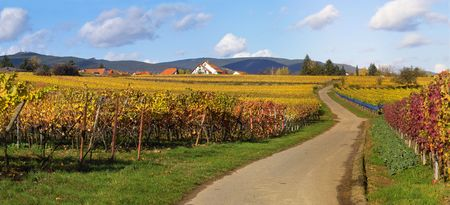 panoramic picture of the road in wineyards, south of Germany