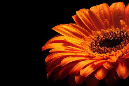 glowing orange flower Stock Photo