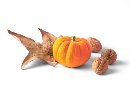 autumn cornacopia decoration photo