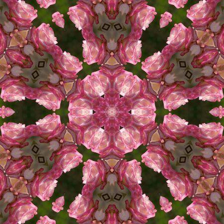 pink rose glowing mandala Stock Photo