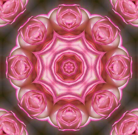 rose flower mandala