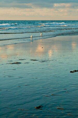 dutch seaside with seagulls