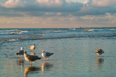 dutch seaside with seagulls photo