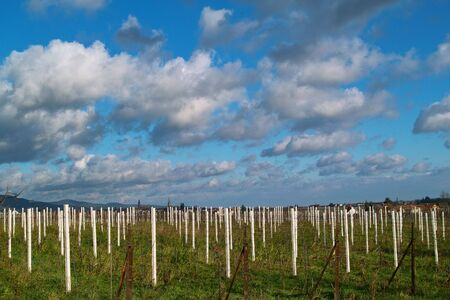 autumn wineyards in the south of germany Stock Photo