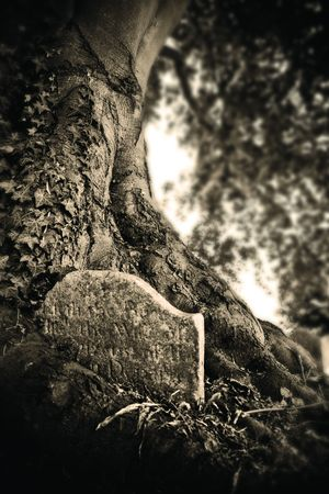 Spooky gravestone with tree growing out of it photo