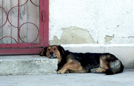 Dog relaxing on doorstep in the sun Stock Photo - 8014782
