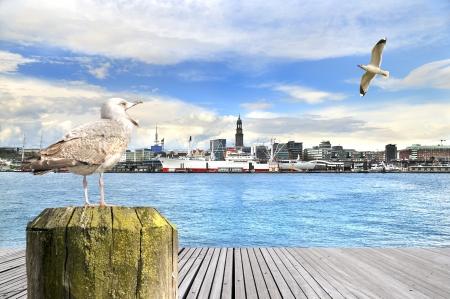 deutschland karte: Hamburg Skyline mit einem Seagull in den Vordergrund